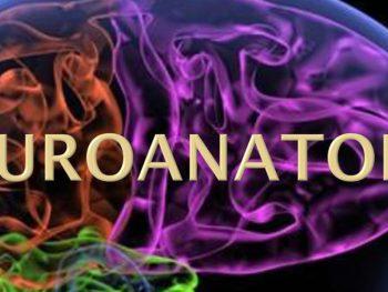 ΜΑ01: Ανατομία – Εφαρμοσμένη Νευροανατομία, Νευροφυσιολογία και Νευροαπεικόνιση
